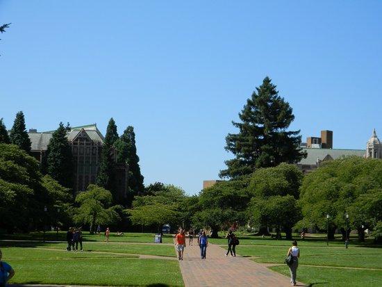 University of Washington: the school quad during summer