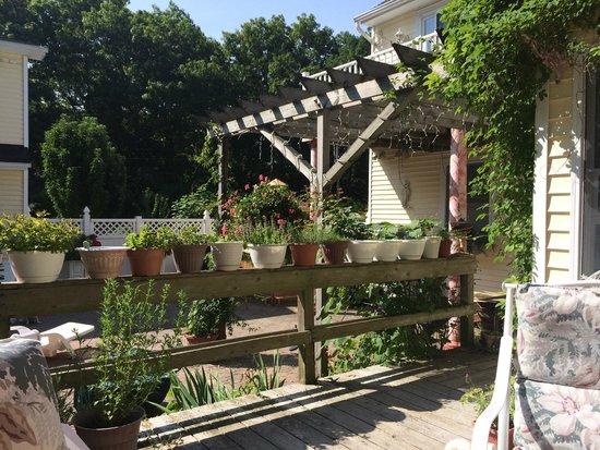 Hamptons House of Gardens Bed & Breakfast : Many herbs surrounding the breakfast table...lovely!