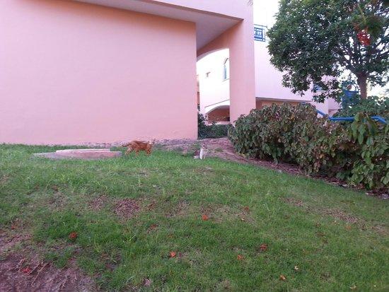 U Sunrise Club Eilat: חתולים