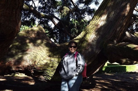 British Columbia Parliament Buildings: May 2014. Inside the tree.