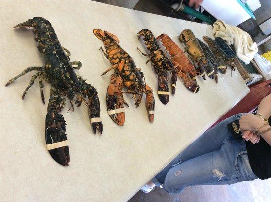 Ryer Lobsters: 七色のロブスター