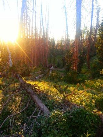 Cedar Breaks National Monument : Alpine Pond Trail Cedar Breaks