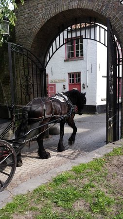Boottochten Brugge: Horse drawn carriage