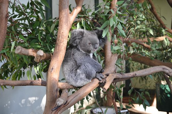 Blue Diamond Tours - Blue Mountains Day Tour: Koala at Featherdale Wildlife Park