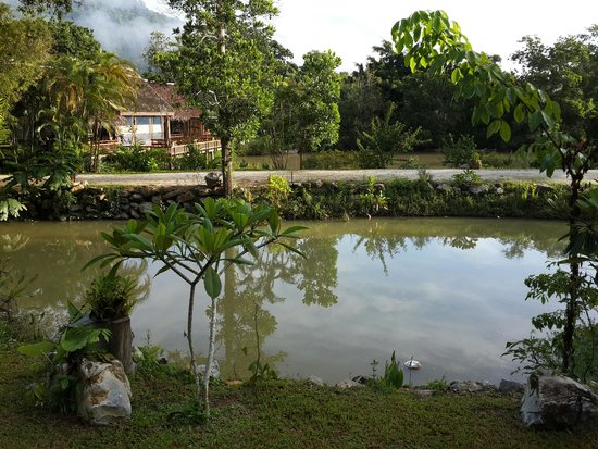 Ban Sainai Resort : Pond view