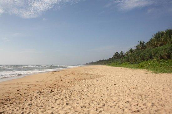 Panchi Villa: Шикарные пляжи Шри-Ланочки