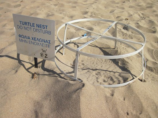 Lara Bay Turtle Conservation Station : Protected Turtle Nest - Lara Beach.