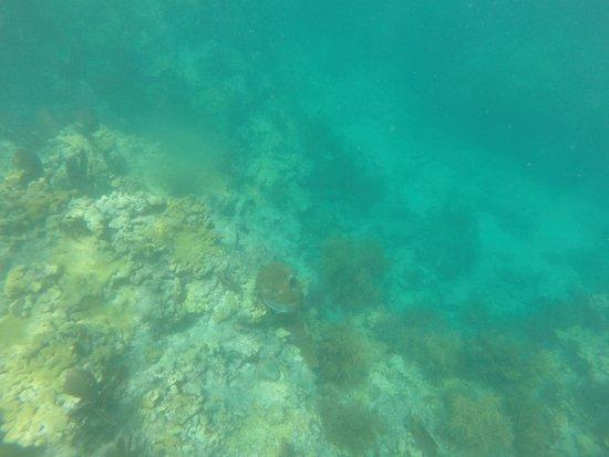 Looe Key (Florida Keys National Marine Sanctuary): underwater