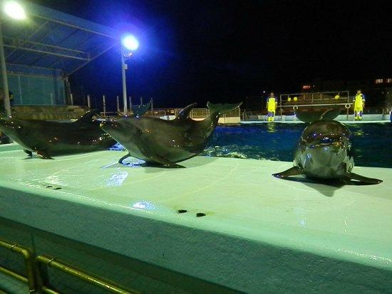 越前松島水族館, イルカのナイトショーの様子
