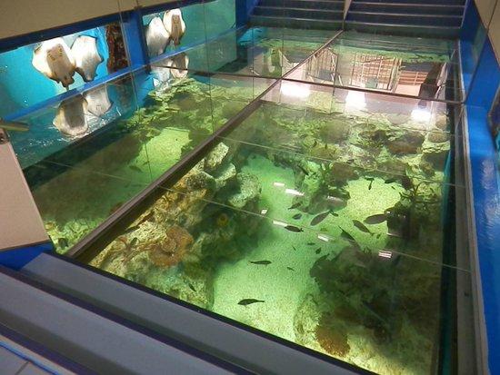 越前松島水族館, 海洋館の「サンゴの海」水槽(この上を歩けます)