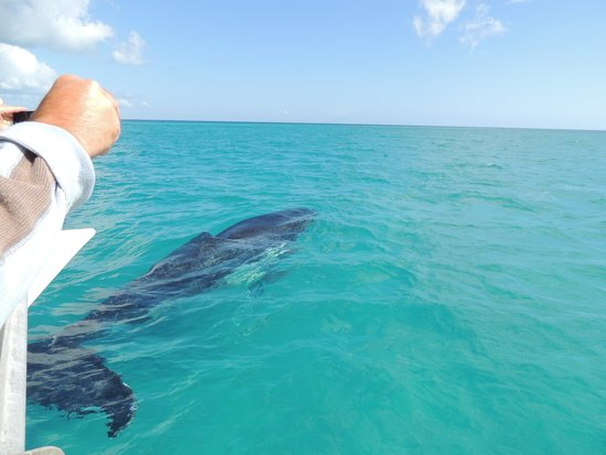 Freedom Whale Watch: So close !