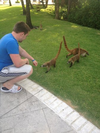 Grand Bahia Principe Coba: Cute little coatis <3