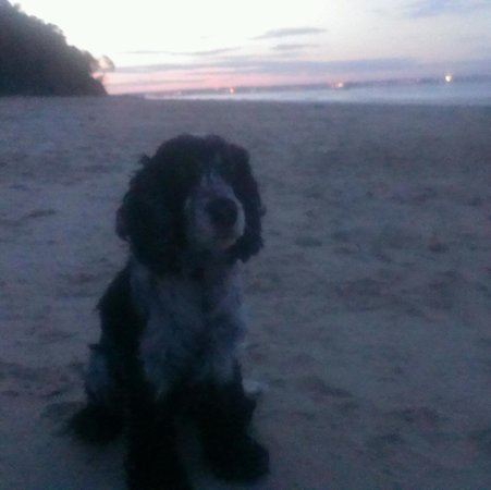 Priory Bay Hotel: Priory Bay Beach! Evening walk with Bert!