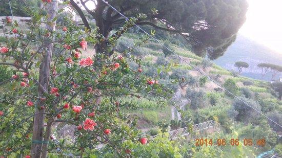 Il Melograno in Costa d'Amalfi: pomegranates in celebration at Melograno in Costa d'Amalfi