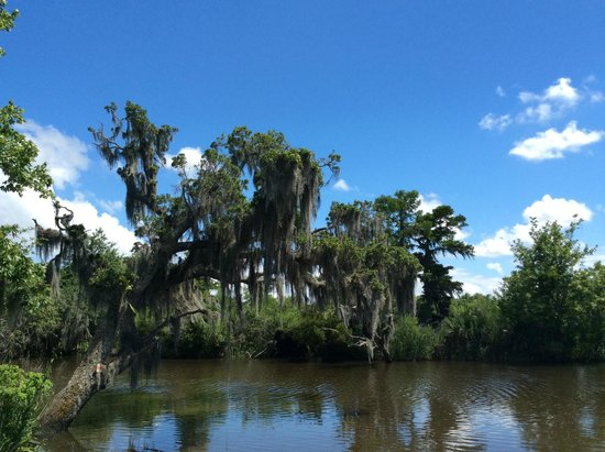 Louisiana Tour Company: Swamp tour