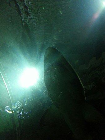 Blue Planet Aquarium : Dun dun derrrrrr