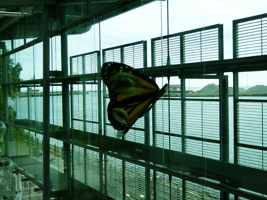 National Glass Centre: part of butterfly exhibit and river behind