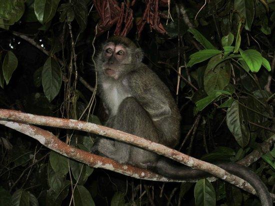 Osman's Homestay: Monkey