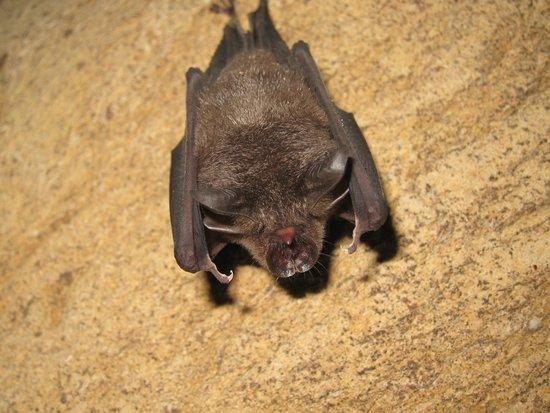 Osman's Homestay: Bat