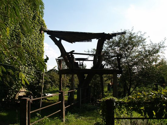 La Lepre Bianca Agriturismo: Casa sull'albero