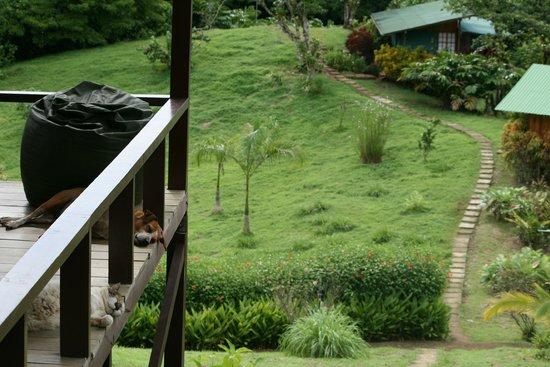 Finca Maresia : Blick von der Terrasse (mit Haustieren...)