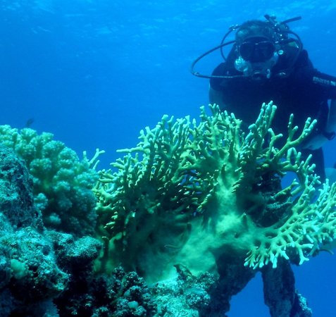 Hyatt Regency Sharm El Sheikh Resort: A dive trip arranged by the hotel