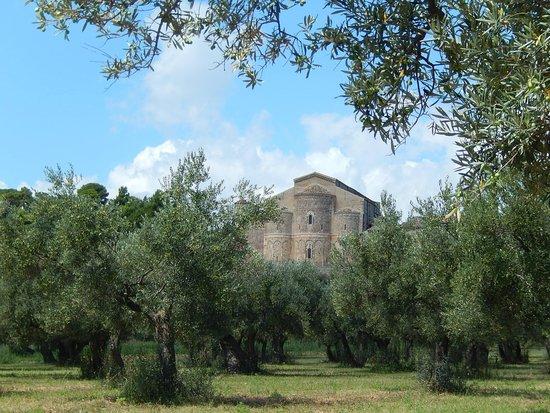 Abbazia di San Giovanni in Venere: sg in venere - panorama tra ulivi 3