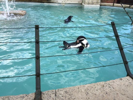 Penguin tank at the encounter  - Picture of Seaview Wildlife