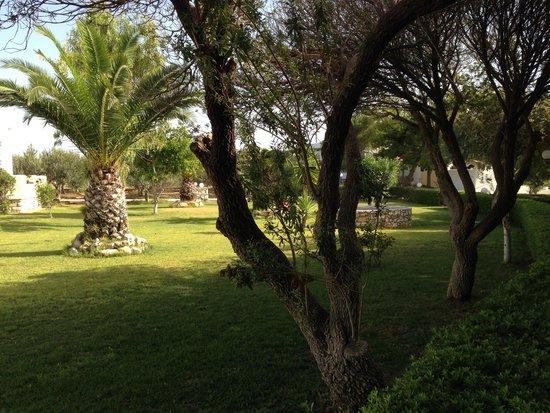 Asteras Paradise: Κήπος