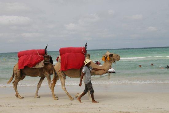 Seabel Rym Beach : Ballade à dos de dromadaire