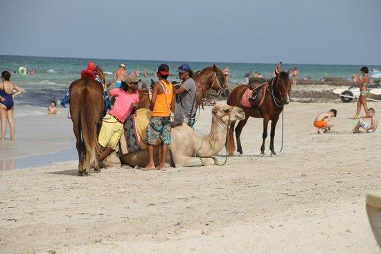 Seabel Rym Beach : Ballade en dromadaire ou à cheval