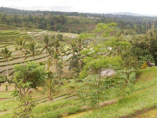 Jatiluwih Green Land: rizières