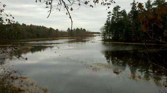 Rachel Carson National Wildlife Refuge: View of the Marsh