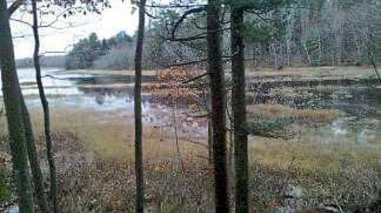 Rachel Carson National Wildlife Refuge: Scxenis view