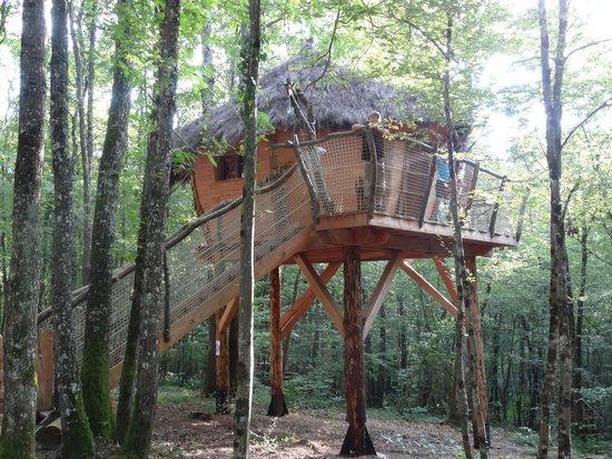 Yourte and Spa: maison dans les arbres