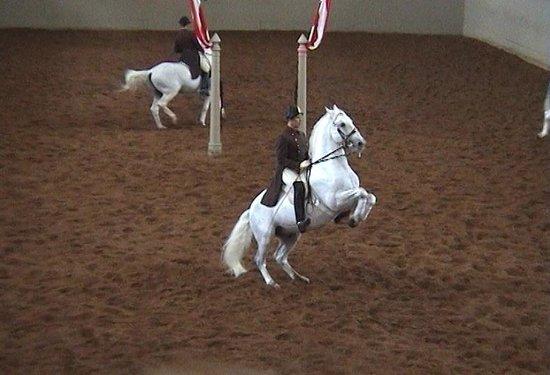 Spanish Riding School: A Courbette
