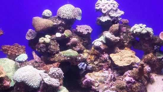 No Frills Excursions : Palma Aquarium