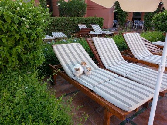 Hotel Les Jardins de l'Agdal : Лежаки и кошки