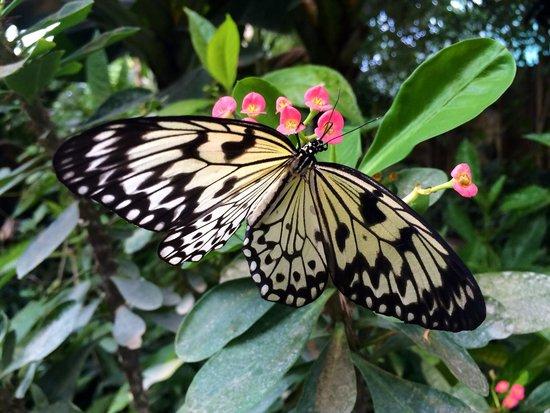 Papillons picture of la serre aux papillons la queue for Attraction yvelines