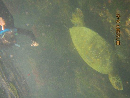 Los Tuneles: Tortuga Marina