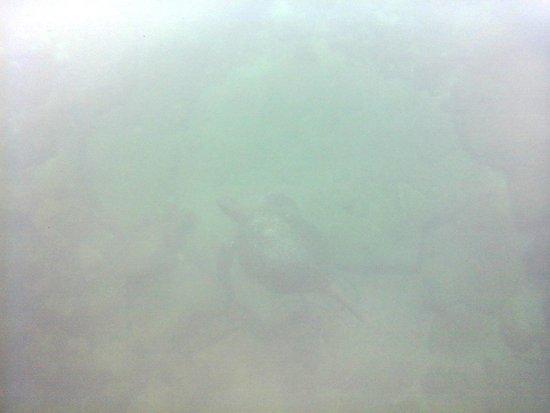 Los Tuneles: Tortuga