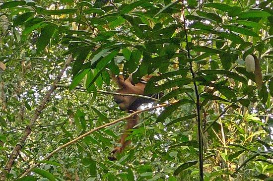 Semenggoh Nature Reserve: A semengoh, dans le parc