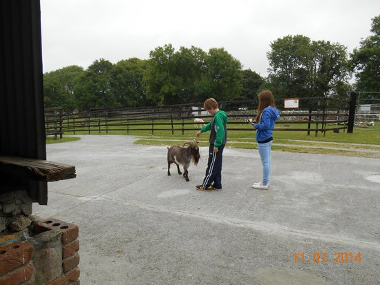 Stonehall Visitor Farm & Wildlife Park