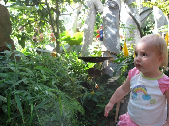 Henry Doorly Zoo: Beautiful, colorful butterflies fly and land everywhere, including on you at the Butterfly House