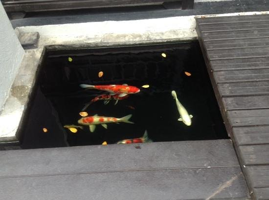 De Lanna Hotel, Chiang Mai: fish by ground floor rooms