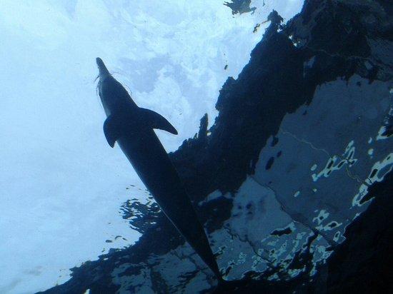 Acquario di Genova: Delfini