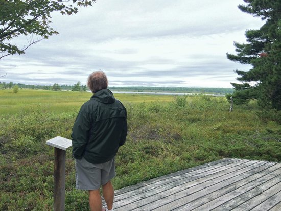 Madeline Island : Overlooking bog in state park