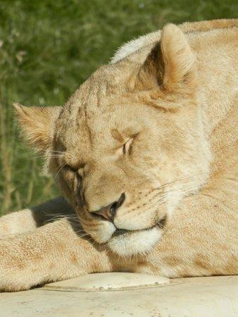 Cerza Safari Lodge : .