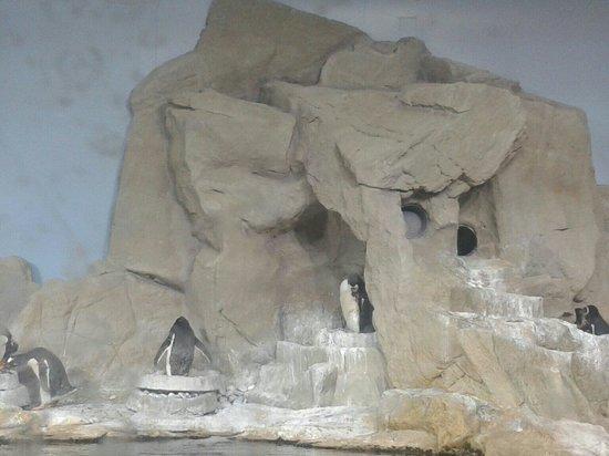 Acquario di Genova: Pinguini