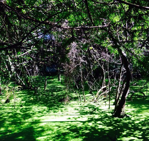 Jupiter, FL: Lush Swamp Experience